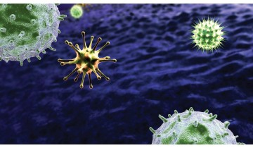 A Common Virus That May Accelerate Immune